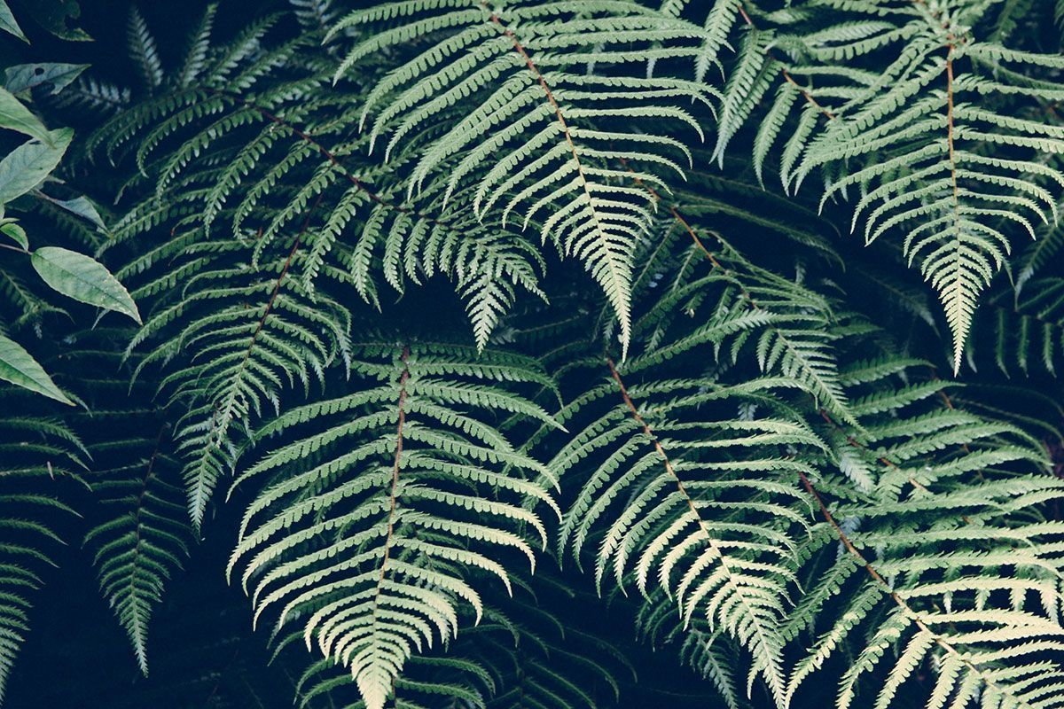 Fondo hojas naturaleza