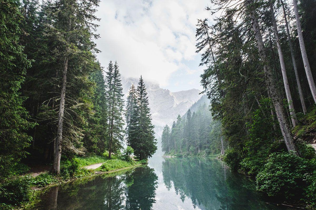 Paisaje bosque y naturaleza